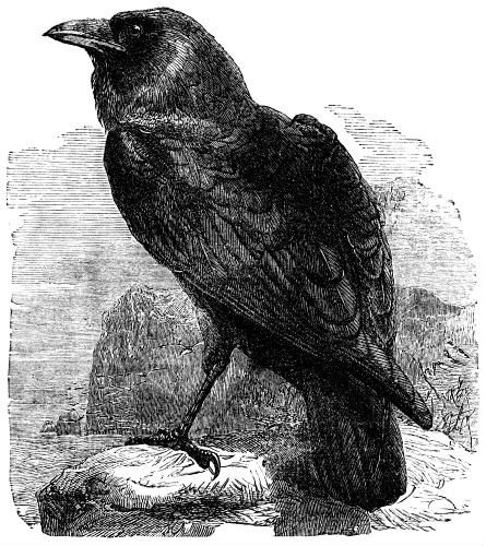 Shall be lifted—nevermore!