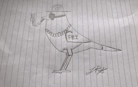 This is what birds really look like.